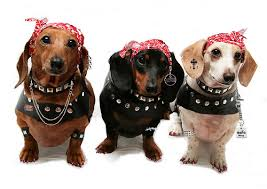 Halloween Costumes Dachshunds Halloween Costumes Dog Woof Room