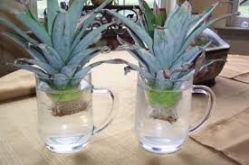 12 Best Plants That Can by 13 Vegetables That Magically Regrow Themselves