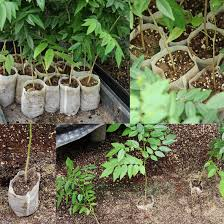 8 Pots by Compare Prices On Nursery Bag Online Shopping Buy Low Price