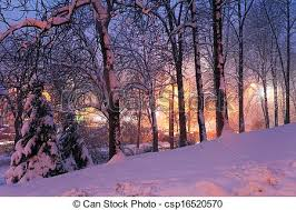picture of snow on trees and city lights snow on winter trees