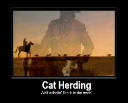 Herding Cats Meme - sometime my life resembles this crazy cat lady pinterest cat