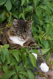 How To Keep Cats Out Of Your Backyard Homemade Citrus Spray As A Cat Deterrent Pets
