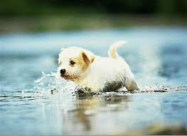 wallpaper desk dogs wallpapers dog wallpaperwallpaper desk cute dogs and puppies wallpapers wallpaper cave