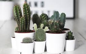 8 super cute indoor plants to buy now sunshine coast the urban