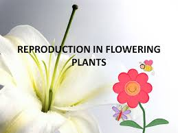reproduction in flowering plants ppt video online download