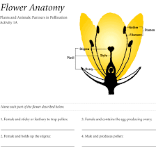Female Anatomy Diagram For Kids Smithsonian Education Partners In Pollination