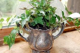 10 indoor plants that you can grow in your house right now the