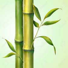 bamboo poles u2013 bamboo products backyard x scapes zozeen