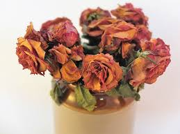 Dry Flowers Free Photo Dried Flowers Dry Texture Blooms Romance Roses Max Pixel
