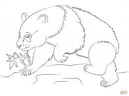 giant panda bear for coloring pages animal download for free