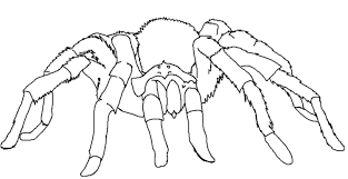 tarantula coloring page desert animals coloring pages desert