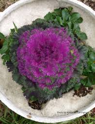 color up winter with flowers and food central texas gardener
