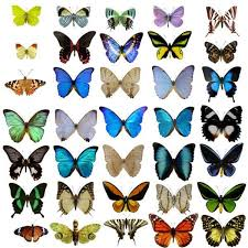 22 best the butterfly effect images on chaos theory