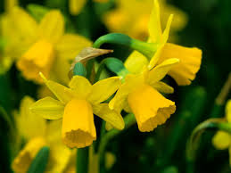 spring gardening planner hgtv
