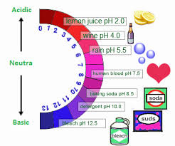 acids bases and salts is salt an acid or a base properties of