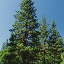 bend oregon s best tree nursery