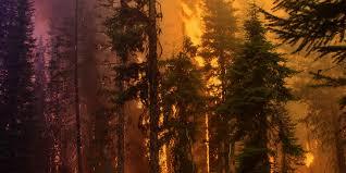 Wild Fires In Montana July 2017 by Firesafe Montana