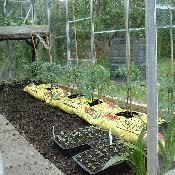 planting a vegetable garden blog