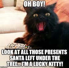 Christmas Cat Memes - oh boy cat memes imgflip