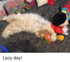 Lazy Day Meme - lazy day meme on sizzle