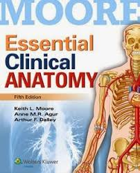 Human Anatomy Textbook Pdf Human Anatomy Moore Essential Clinical Anatomy Its One Of The