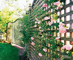 Create Privacy In Backyard by Best 25 Cheap Privacy Fence Ideas Only On Pinterest Cheap Fence