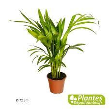 plante d駱olluante bureau aréca palmier d arec plante d intérieur dépolluante