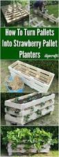 Raised Garden Beds From Pallets - best 25 pallet gardening ideas on pinterest pallets garden