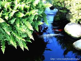 garden fish pond live life and love
