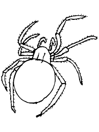 spider coloring pages coloring pages print