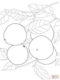 100 acorn coloring pages pikachu printable coloring pages www