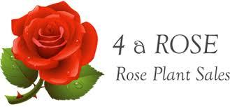 D Roses Buy Rose Plants Online D U0026 S Nurseries