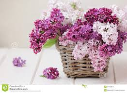 Lilac Flower by Lilac Flowers Bouquet Stock Photo Image 54480516
