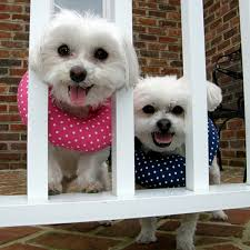 dogs escaping fences
