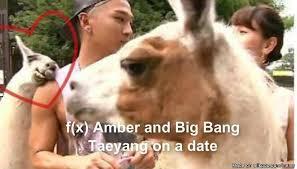 Amber Meme - f x amber and big bang taeyang on a date allkpop meme center
