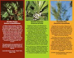 propagating australian native plants friends of the environment invasive plants