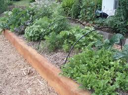 How To Start A Garden Bed How To Start A Garden Transition Towns New Zealand Aotearoa