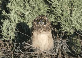 how to find and photograph owls u2014 bird photography audubon