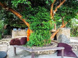 resort sanctuaria treehouses concepcion philippines booking com