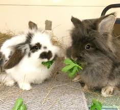 rehome a rabbit sussex