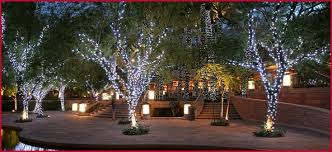 christmas lights tree wrap outdoor christmas lights on trees the best option learn to wrap