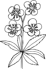 free printable flower coloring pages 16 pics how to draw in 1