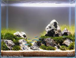 Aquascape Tank 95 Best Aquascape Images On Pinterest Aquarium Ideas