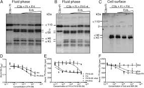 staphylococcal ecb protein and host complement regulator factor h