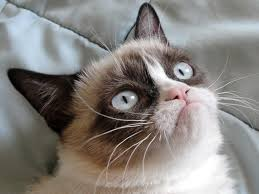 No Meme Grumpy Cat - grumpy cat the basement news
