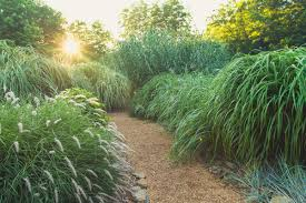 ornamental grass garden springfield greene county park board