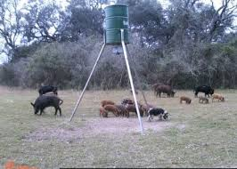 hog hunting lights for feeder texas hog hunting texas deer hunting self guided great prices