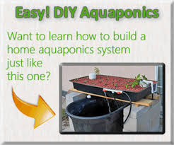 top 7 tips for growing aquaponic plants vegetable gardening