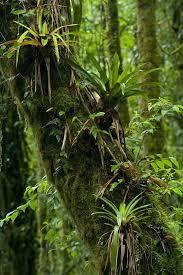 best but black friday amazon forest best 25 jungle tree ideas on pinterest paper tree classroom