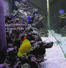 Live Rock Aquascaping Marine Aquarium Reef Tank Customer Photos Live Rock Aquascapes